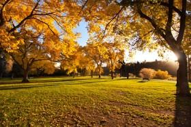 Fall season in Saskatoon Saskatchewan