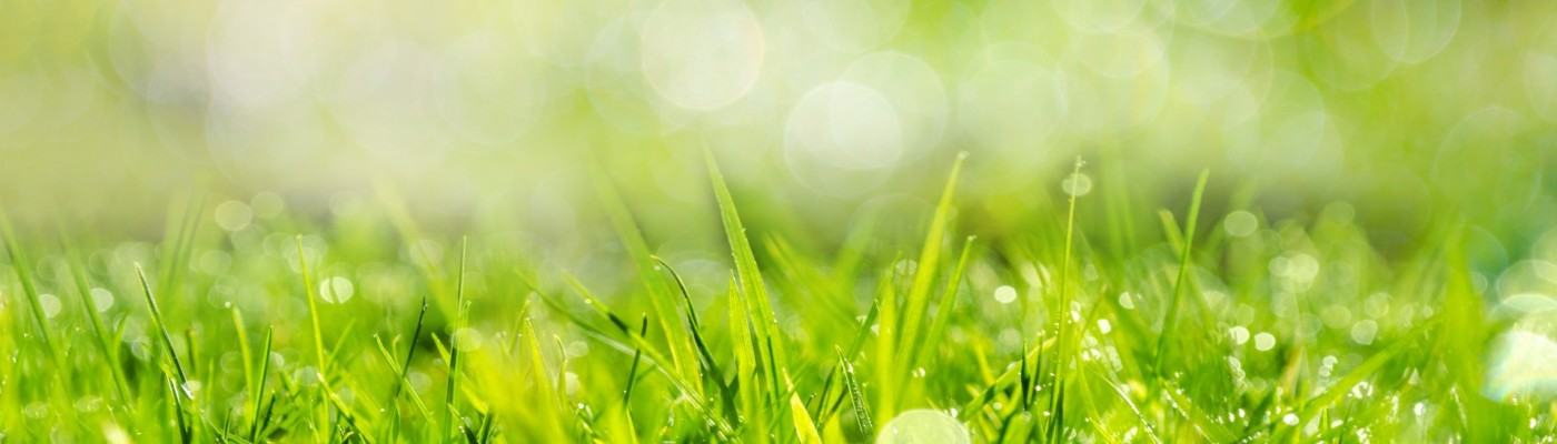 Saskatoon lawn care